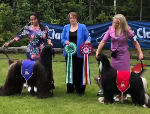 Afghanhounds of Norway Specialty 2019