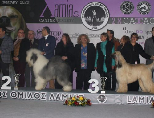 Lamia Kennel Club IDS 18/01/2020