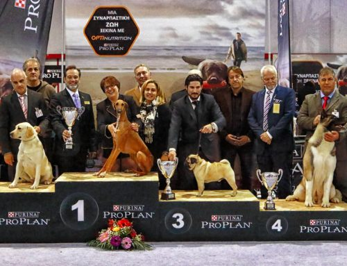 Lamia Kennel Club NDS 17/01/2016