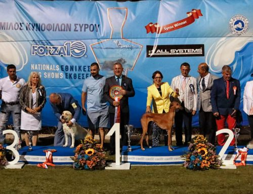 Syros Kennel Club NDS 14/07/2016