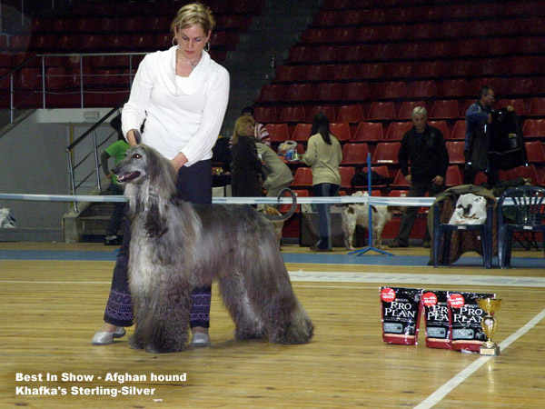 Afghan Hound Greece