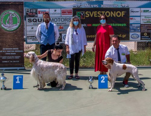 Pointer – Setter Club of Greece 71st Special Show 19/07/2020